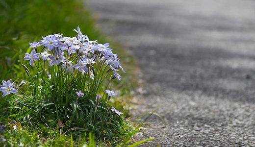 春の散歩道で見つけた花と野鳥