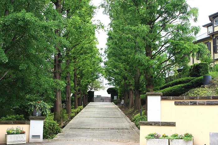 イタリア山庭園の銀杏並木