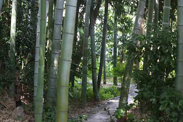 武相荘の散策路