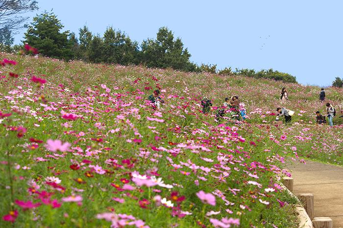 昭和記念公園花の丘