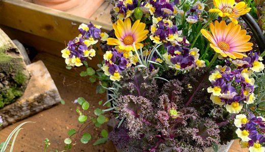 春に植える宿根草を探しにお花屋さんへ♪