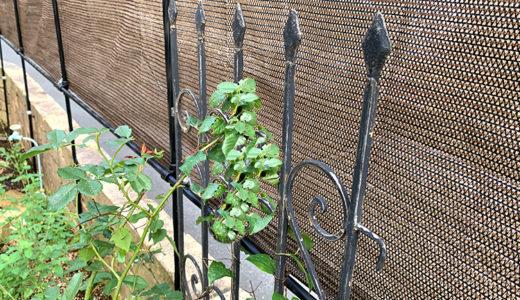 低予算でおしゃれに♪庭の目隠しアイディア